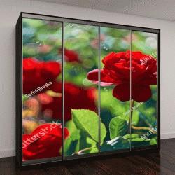 """Шкаф купе с фотопечатью """"Красная роза в палисаднике """""""