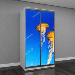 """Шкаф купе с фотопечатью """"медузы в неоновом свете с рыбами"""""""