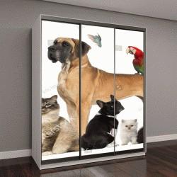 """Шкаф купе с фотопечатью """"Группа животных: собаки, кошки, птицы, рептилии, кролик"""""""