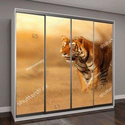 """Шкаф купе с фотопечатью """"Великий тигр самец в природе """""""