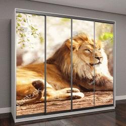 """Шкаф купе с фотопечатью """"Красивый большой африканский лев """""""