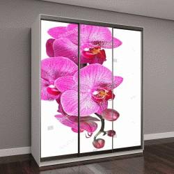 """Шкаф купе с фотопечатью """" цветок орхидеи с розовыми прожилками"""""""