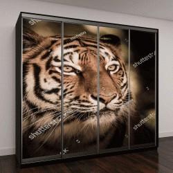 """Шкаф купе с фотопечатью """"Дикий Амурский тигр в джунглях"""""""