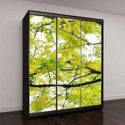 """Шкаф купе с фотопечатью """"Красивая большая ветка дерева с зелеными листьями """""""