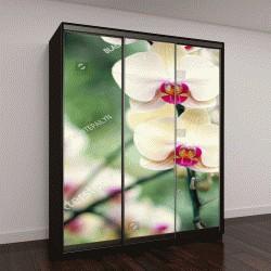 """Шкаф купе с фотопечатью """"красивая желтая орхидея"""""""