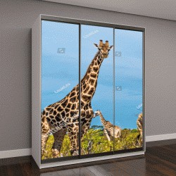 """Шкаф купе с фотопечатью """"Жираф, Национальный парк Чобе, Ботсвана"""""""