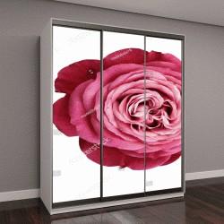 """Шкаф купе с фотопечатью """"розовый-красный-белый цветок розы"""""""