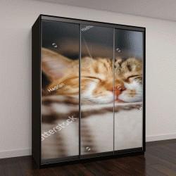 """Шкаф купе с фотопечатью """"красивый кот спит """""""