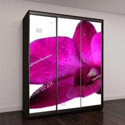 """Шкаф купе с фотопечатью """"орхидеи отделить от белой земле, курортный бизнес идеи или сайт"""""""