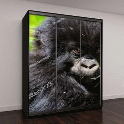 """Шкаф купе с фотопечатью """"Детское горных горилл в горах Вирунга в Руанде"""""""