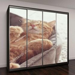 """Шкаф купе с фотопечатью """"Рыжий кот спит в своей постели """""""