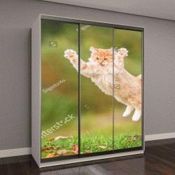 """Шкаф купе с фотопечатью """"рыжий кот летающий в воздухе """""""