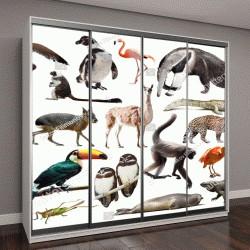 """Шкаф купе с фотопечатью """"коллекция рептилий; птиц; млекопитающих животных и насекомых из Южной Америки"""""""