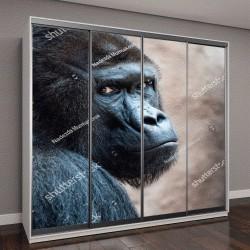 """Шкаф купе с фотопечатью """"Лицо орангутанга"""""""