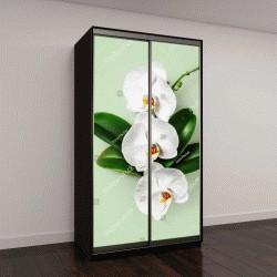 """Шкаф купе с фотопечатью """"Белая орхидея цветы и листья на зеленом фоне """""""