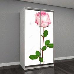"""Шкаф купе с фотопечатью """"Одинокая красивая розовая роза на белом фоне"""""""