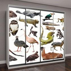 """Шкаф купе с фотопечатью """"Набор южноамериканских диких птиц, животных, пресмыкающихся и насекомых"""""""