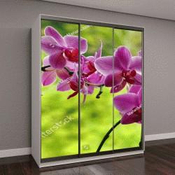 """Шкаф купе с фотопечатью """"Орхидеи"""""""