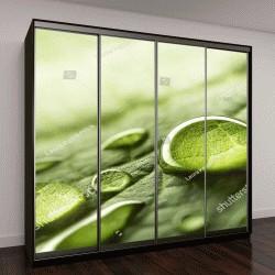 """Шкаф купе с фотопечатью """"капли дождевой воды на зеленом листе """""""