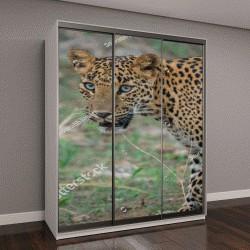 """Шкаф купе с фотопечатью """"Взгляд самки леопарда в лесной зоне"""""""