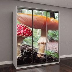 """Шкаф купе с фотопечатью """"Два диких гриба, растущих в красивом лесу"""""""
