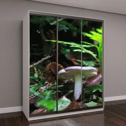 """Шкаф купе с фотопечатью """"сыроежки под папоротником в темных джунглях, Коста-Рика"""""""