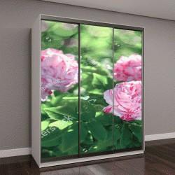 """Шкаф купе с фотопечатью """"Цветы роз, цветущих в саду роз"""""""