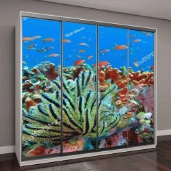 """Шкаф купе с фотопечатью """"жизнь тропических рыб """""""