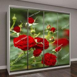 """Шкаф купе с фотопечатью """"Красивые розы в саду"""""""