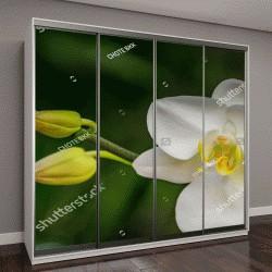 """Шкаф купе с фотопечатью """"белые орхидеи в Таиланде"""""""