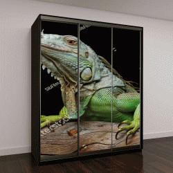 """Шкаф купе с фотопечатью """"Игуана на темном фоне"""""""