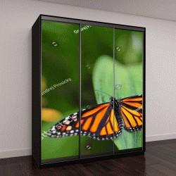 """Шкаф купе с фотопечатью """"бабочки в природной среде обитания"""""""