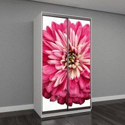 """Шкаф купе с фотопечатью """"Хризантема ярко-розовый цветок"""""""