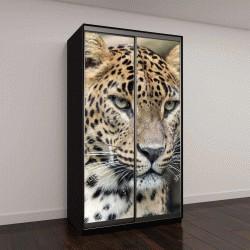 "Шкаф купе с фотопечатью ""Леопард, Пантера"""