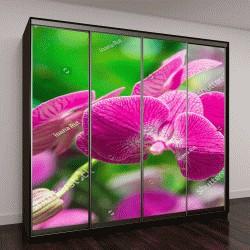 """Шкаф купе с фотопечатью """"Красивый розовый цветок орхидеи с зеленым цветочным фоном"""""""