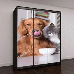 """Шкаф купе с фотопечатью """"Британские короткошерстные кошки и золотистый ретривер"""""""