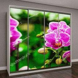 """Шкаф купе с фотопечатью """"розовая орхидея в зимний день"""""""