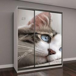 """Шкаф купе с фотопечатью """"Голубоглазая кошка"""""""