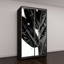 """Шкаф купе с фотопечатью """"листья с белым и черным """""""