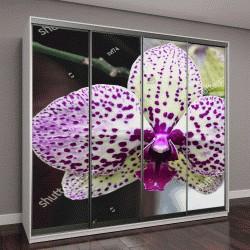 """Шкаф купе с фотопечатью """"Цветок орхидеи в тропическом саду крупным планом"""""""