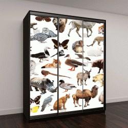 """Шкаф купе с фотопечатью """"коллекция птиц, млекопитающих и рептилий из Азии на белом фоне"""""""