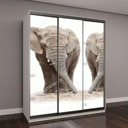 """Шкаф купе с фотопечатью """"Африканские слоны на белом фоне"""""""