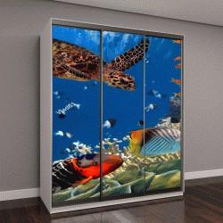 """Шкаф купе с фотопечатью """"Красочный коралловый риф с множеством рыб и морских черепах"""""""