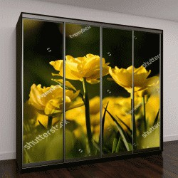 """Шкаф купе с фотопечатью """"цветение тюльпанов в саду """""""