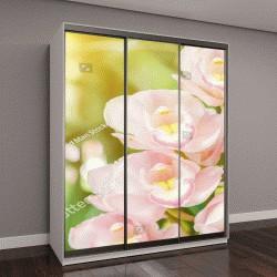 """Шкаф купе с фотопечатью """"Цветок орхидеи в саду в весенний день """""""