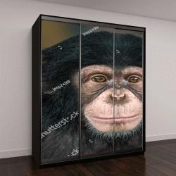 """Шкаф купе с фотопечатью """"Портрет шимпанзе"""""""