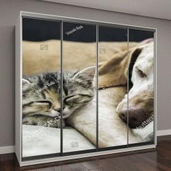 """Шкаф купе с фотопечатью """"Друзья кот и пес"""""""