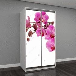 """Шкаф купе с фотопечатью """"Розовая орхидея на белом"""""""