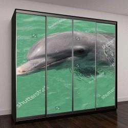 """Шкаф купе с фотопечатью """"Дельфин в неволе"""""""