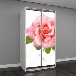 """Шкаф купе с фотопечатью """"Красивая роза, изолированные на белом фоне"""""""